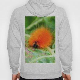 Hairy Caterpillar on Sunflower Leaf Hoody