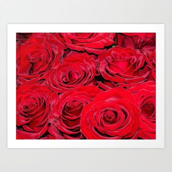 Bed of red roses- Photography pattern of red rose Art Print