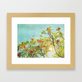 Pink Camellia japonica Blossoms and Sun in Blue Sky Framed Art Print