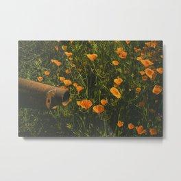 California Poppies 012 Metal Print