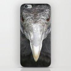 American black vulture iPhone & iPod Skin