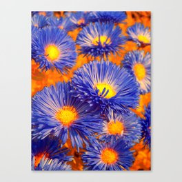 aster abstract Canvas Print