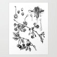 Botanical #CHERRIES Art Print