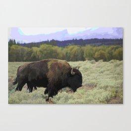 Buffalo Bull in Sage Canvas Print