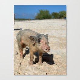Bahamas Pig 2 Canvas Print