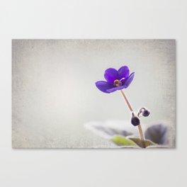 Boxing purple Canvas Print