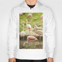 flamingos Hoodies featuring Flamingos by Sandy Broenimann