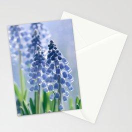 Grape hyacinths muscari 278 Stationery Cards