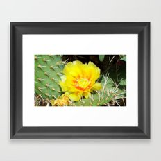 Prickly Yellow Beauty Framed Art Print
