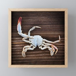 Crabby Framed Mini Art Print