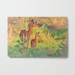 Impala Antelope - Mother and Baby Animal Metal Print