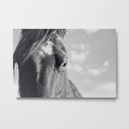 Close Up Horse Picture in Black and White Metal Print
