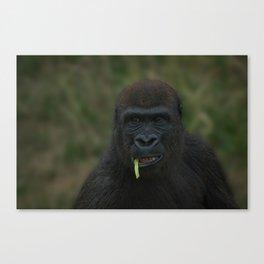 Lope The Gorilla Canvas Print