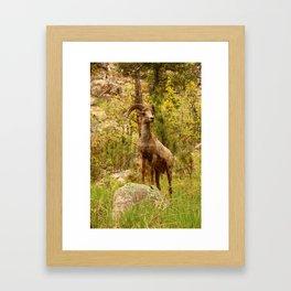His Teritory Framed Art Print