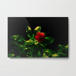 Nice Flower Picture Metal Print