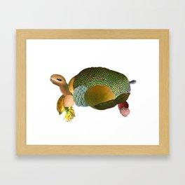 Fruit Sulcata Framed Art Print