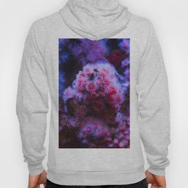 Under the Sea Blooming Magenta Coral Reef Sea anemone Underwater Photography Colored Lustre Print Hoody