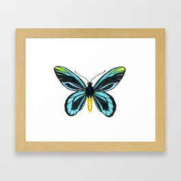 Queen Alexandra' s birdwing butterfly Framed Art Print