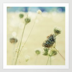 Sunny Queen Anne's Lace Art Print