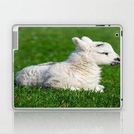 A Sleepy Newborn Lamb In A Field Laptop & iPad Skin