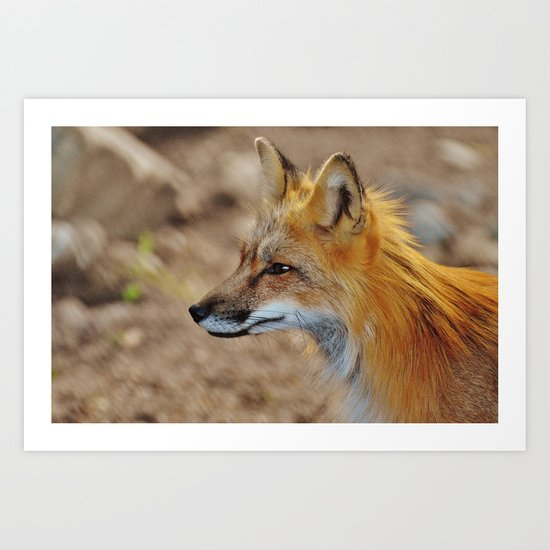 Inquisitive Mr. Fox Art Print