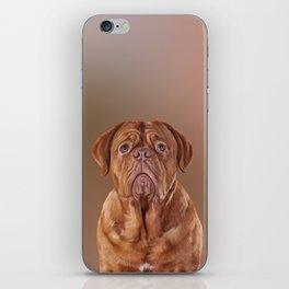 Drawing dog portrait Dogue de Bordeaux iPhone Skin