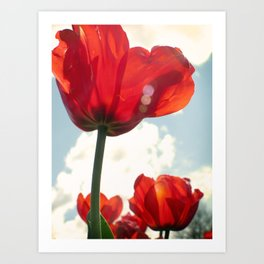 Flower Photography, Deep Ruby Red Art Print, Autumn, Home Decor Nursery Decor  Nature 8x10 Art Print