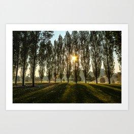 Penn State Arboretum Art Print