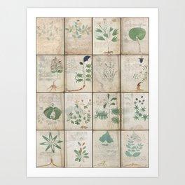 The Voynich Manuscript Quire 1 - Natural Art Print