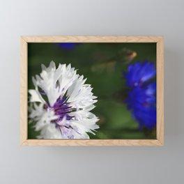 White cornflower Framed Mini Art Print