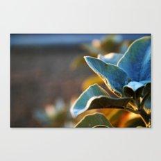 Desert Leaves Canvas Print