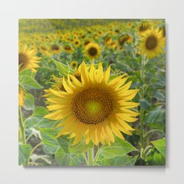 Sunflower. Summer dreams Metal Print