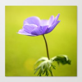 Purple Anemone Natural Green Background Canvas Print