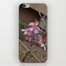 It's Spring Ya'll!! iPhone & iPod Skin