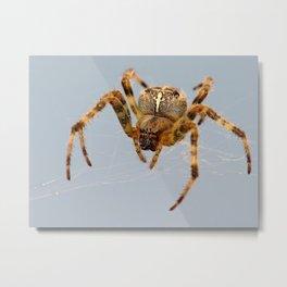 Garden/Cross Spider Metal Print