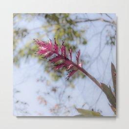 Pink Bromelia Metal Print