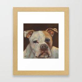 Gino - Portrait of a dog Framed Art Print