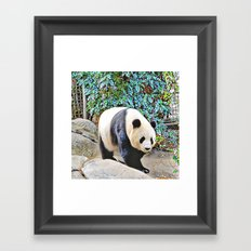Panda at the San Diego zoo Framed Art Print