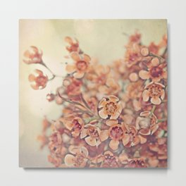 Orange Waxflowers Metal Print