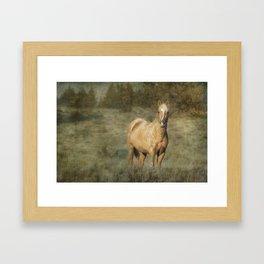 Young Palomino Bachelor Stallion Framed Art Print