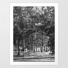 Black-and-White Woods Art Print
