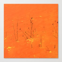 Winter Grasses Canvas Print