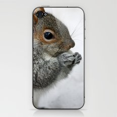 Snow Squirrel iPhone & iPod Skin