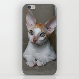 Green Eye - Cornish rex iPhone Skin