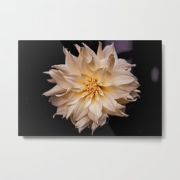 White isolated flower Metal Print