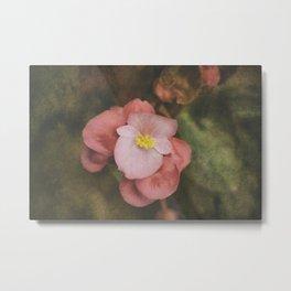 Begonia Metal Print