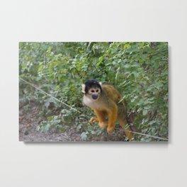 A friendly monkey Metal Print