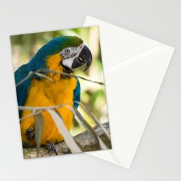 Parrots couple in the tree tops Stationery Cards