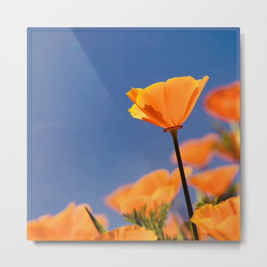 Poppies on Blue Metal Print