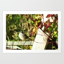 Fence Sitter Art Print